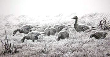 Pink-footed Geese © Andrew Mart